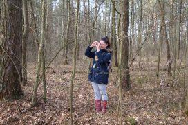 Дослідження висоти деревостану