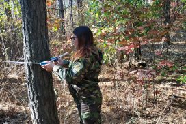 Дослідницька справа лісової науки